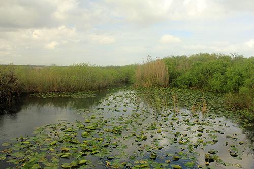 blogimage_Everglades